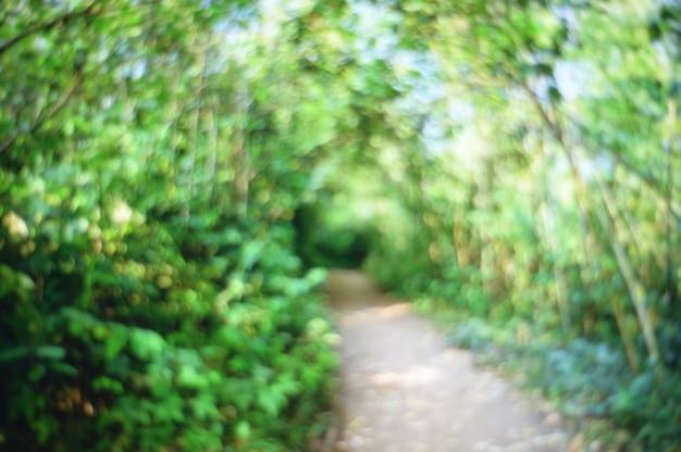 抽象的なぼやけた自然歩道の森の背景。 Premium写真