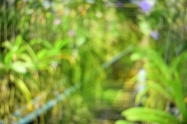 抽象的なぼやけた自然の花の蘭の背景。 Premium写真