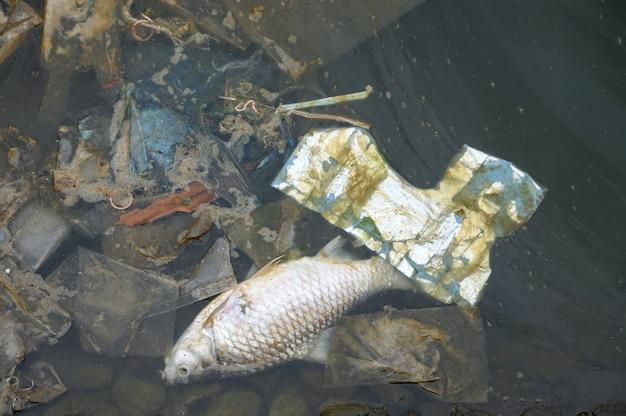 死んだ魚、排水中のゴミ Premium写真