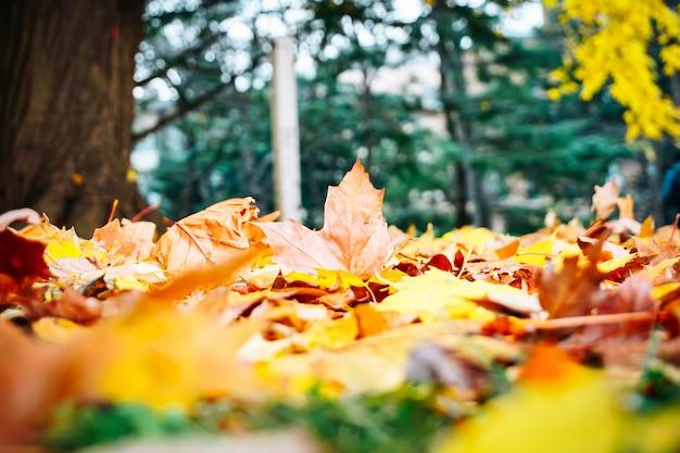 Осенний сезон деревьев и листьев Premium Фотографии