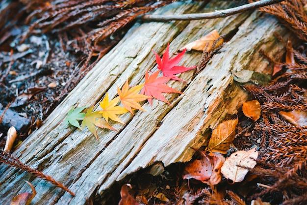 Осенний сезон красочный из дерева и листьев Premium Фотографии