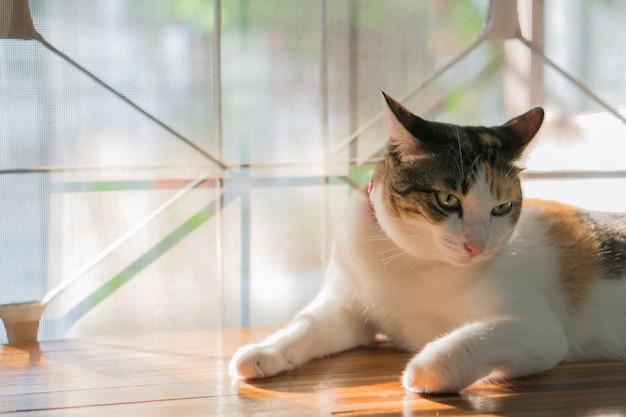 Кошки в таиланде Premium Фотографии