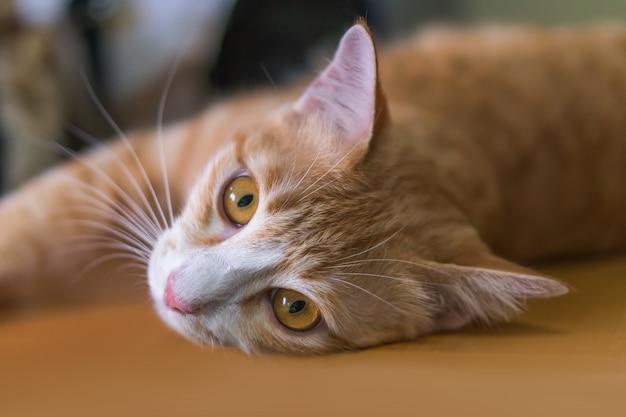 オレンジ色の猫は横になってこのように見ています。 Premium写真