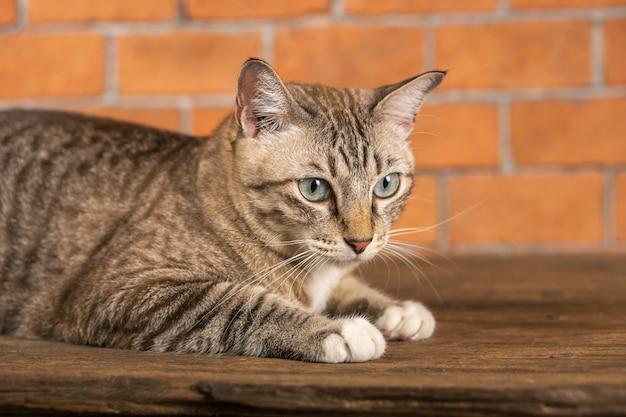 Так выглядят кошки очень мило. Premium Фотографии