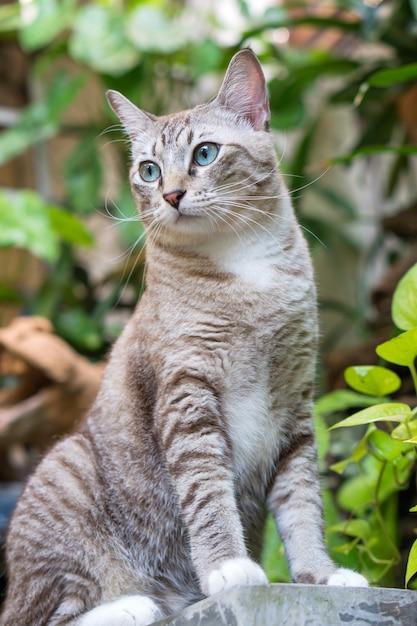 Красивая кошка в саду. Premium Фотографии