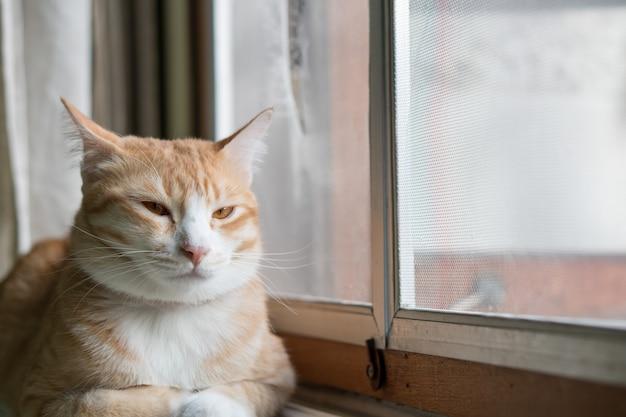 Оранжевый кот сидит у себя дома окно. Premium Фотографии