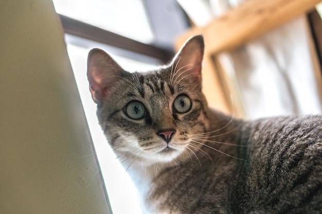 Кошка живет возле окна. Premium Фотографии
