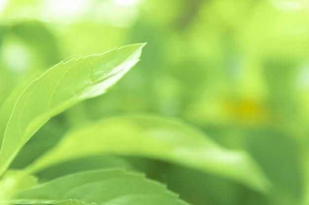 公園、庭または森のビューテクスチャ緑自然ぼやけた背景の緑の葉を閉じます。緑の自然の背景の空のスペースに書き込みまたはコピーするために使用します。 Premium写真