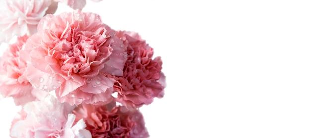 ピンクのカーネーションの花は、コピースペースと白の背景に分離 Premium写真