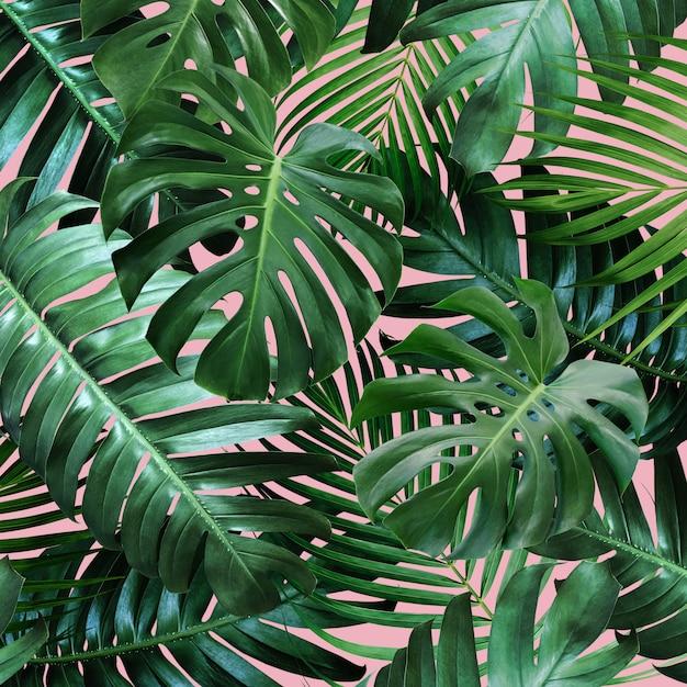 Тропические листья на розовом фоне Premium Фотографии