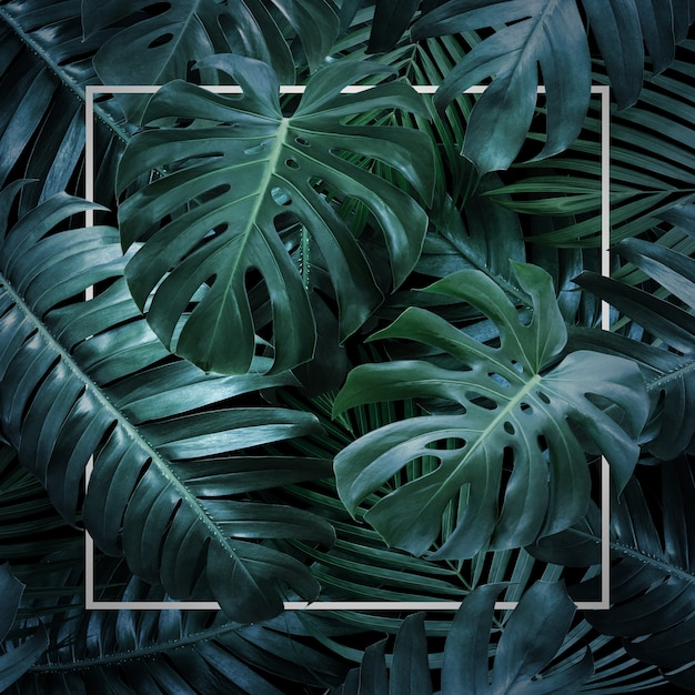 黒の背景に夏の熱帯の葉 Premium写真