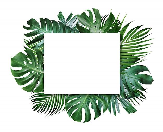Летние тропические листья и пустая рамка с копией пространства на белом фоне Premium Фотографии