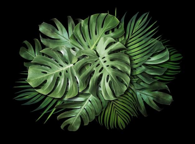 コピースペースと黒の背景に熱帯の葉 Premium写真