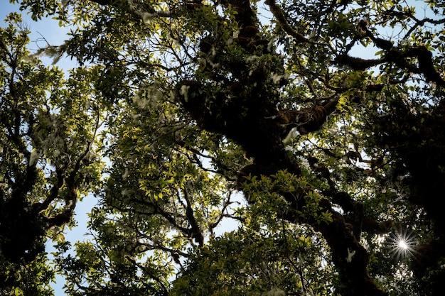 Тропический лес, зеленые джунгли пейзаж Premium Фотографии
