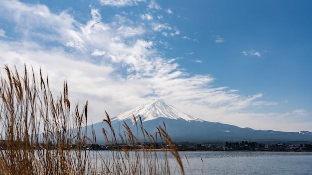黄金の牧草地の草と山富士の背景 Premium写真