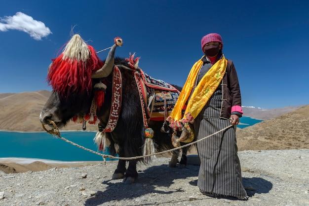 ヤク、チベットのナムツォ湖 Premium写真