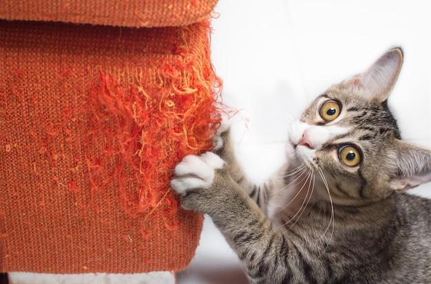 Котенок, расчесывающий ткань Premium Фотографии