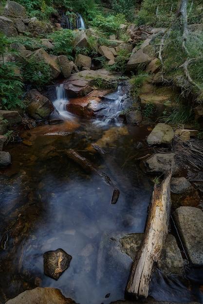 スペインの自然公園で葉に囲まれた岩の間を流れる小さな川 Premium写真