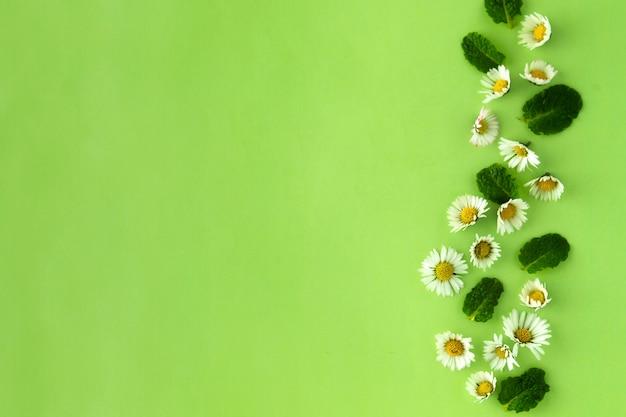 カモミールの花とミントのハーブをグリーンに、お茶やデザインに。 Premium写真