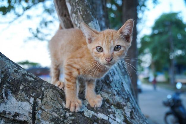 木の上の野良猫 Premium写真