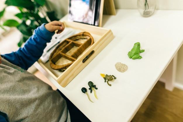 モンテッソーリの方法論学校の教材は、子供たちによって操作されている Premium写真