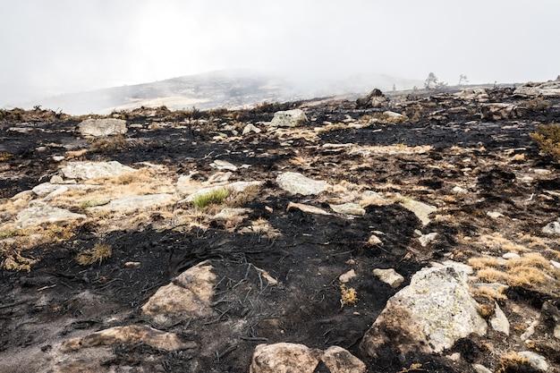 Остатки лесного пожара с обожженным кустарником. Premium Фотографии