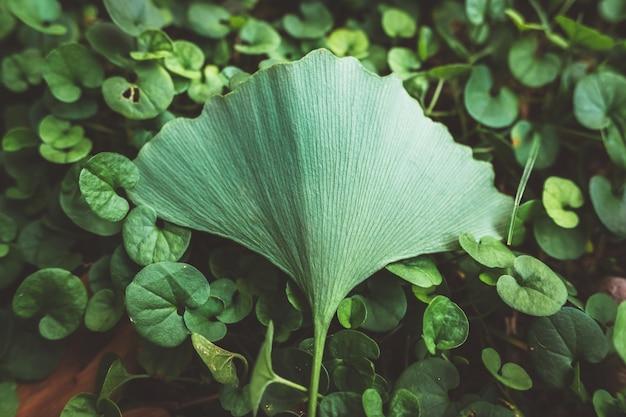 特別であるため、単一の葉は、落ち着いた色調と追加されたフィルムグレインで、残りの植物から際立っています。 Premium写真