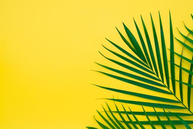 Зеленые листья пальмы на желтом фоне. Premium Фотографии