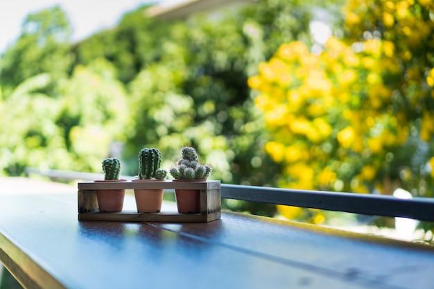 Кактус в пластиковом горшке положить в деревянную подставку на деревянный стол с дерева и небо для фона Premium Фотографии