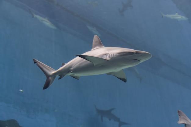 海洋生物、水中環境で水中を泳ぐサメ Premium写真