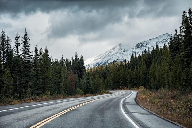 バンフ国立公園の憂鬱な日に秋の森のアスファルト道路 Premium写真
