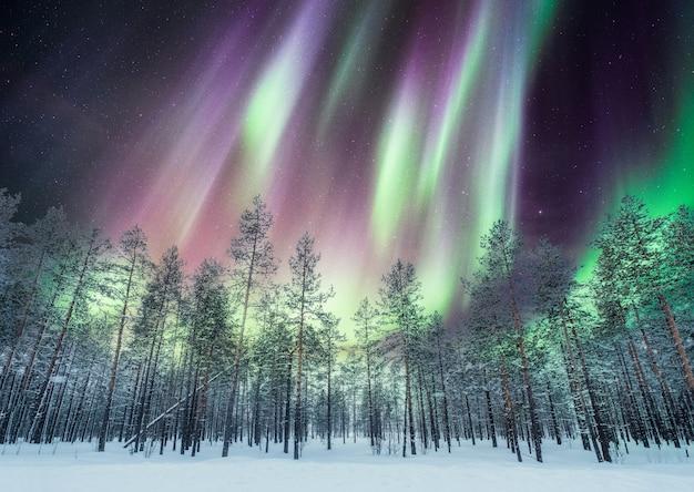 雪の上の松林の上のオーロラ Premium写真
