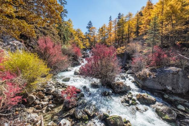 秋の松林の中のカラフルな滝 Premium写真