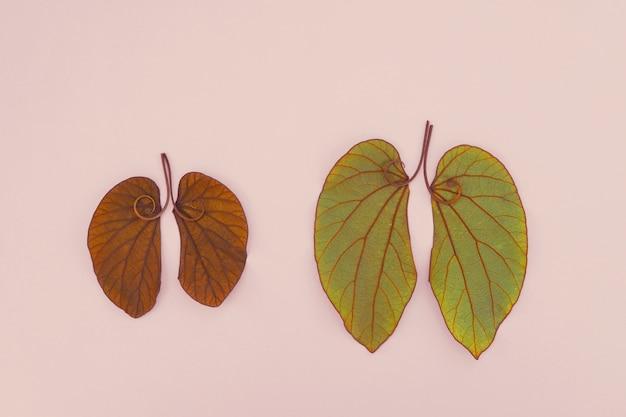 肺型の葉 Premium写真
