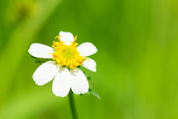 Зеленая трава и ромашки в природе Premium Фотографии