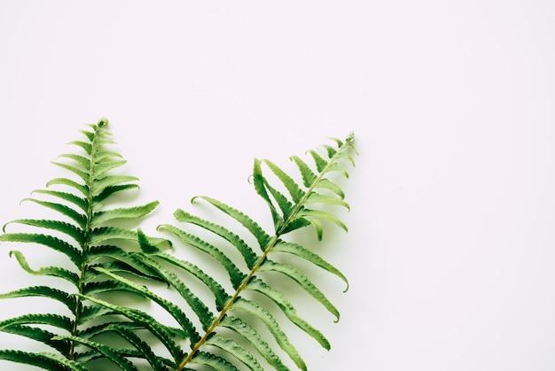 白い背景の上の熱帯植物 Premium写真
