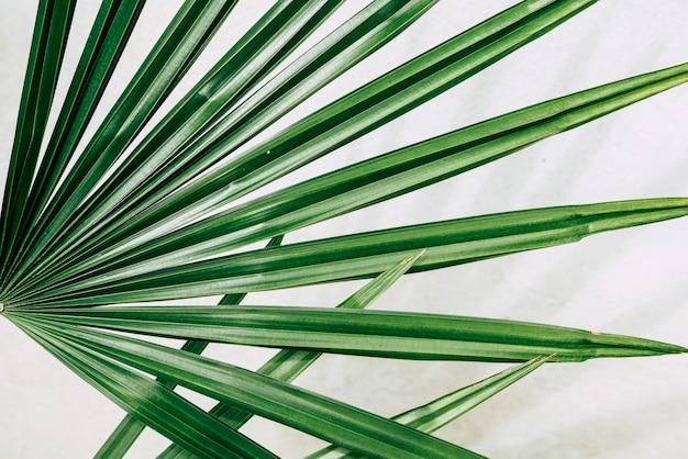 白の熱帯植物 Premium写真
