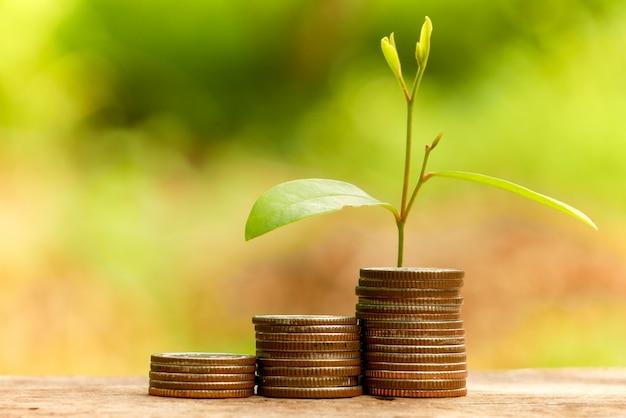 投資コンセプトのためにお金を節約します。コインから育つ植物 Premium写真