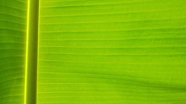 バナナの新鮮な緑の葉のテクスチャ背景 Premium写真