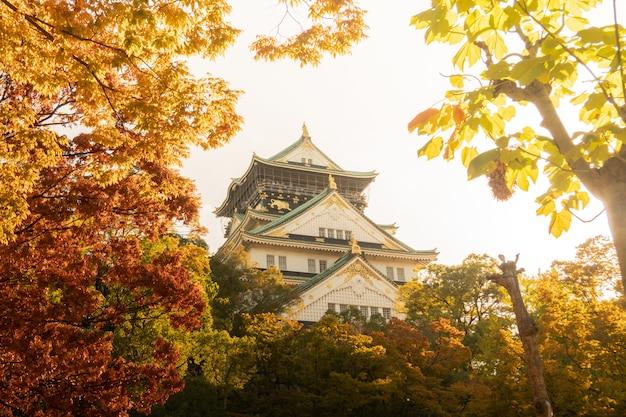 Замок осака в осаке с осенними листьями. концепция путешествий японии Premium Фотографии