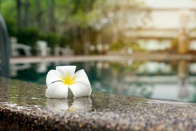 リラックスした日にプールの端にプルメリアの花 Premium写真