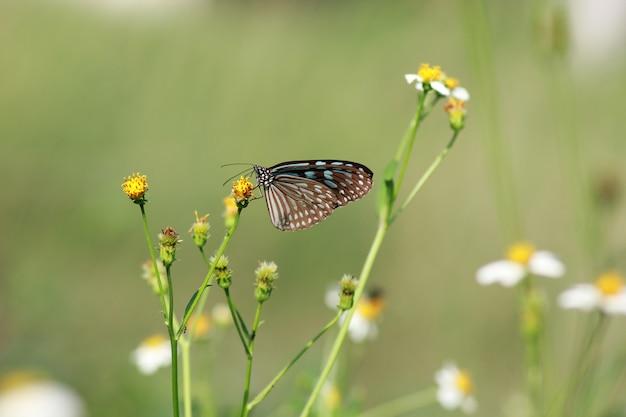 Бабочки и цветы в прекрасном саду. Premium Фотографии