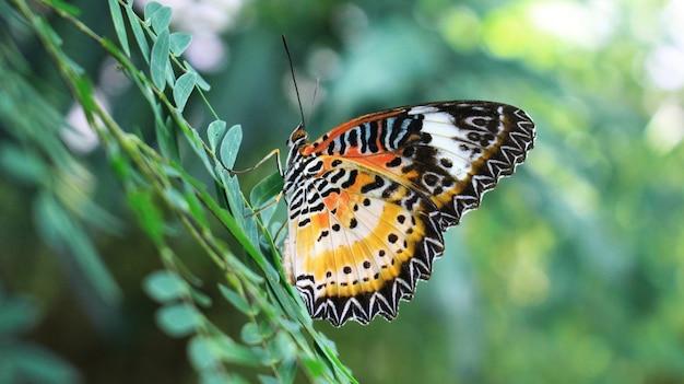 葉の上のカラフルな蝶。 Premium写真