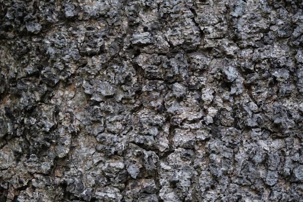 大まかな木の皮の表面のテクスチャ。背景の大まかな木肌表面のクローズアップのテクスチャ Premium写真