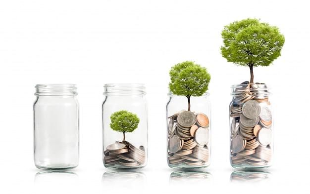 お金のコインと瓶に成長しているツリー。 Premium写真