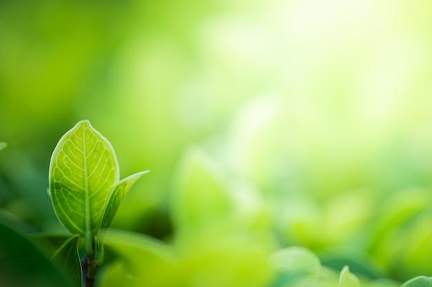 自然緑のクローズアップの美しい景色は、公共の庭公園で日光とぼやけた緑の木の背景に残します。それは風景の生態学であり、壁紙と背景のコピースペースです。 Premium写真