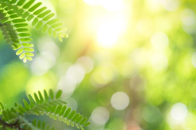 Красивый вид крупного плана лист зеленого цвета природы на растительности запачкал предпосылку с космосом солнечного света и экземпляра. Premium Фотографии