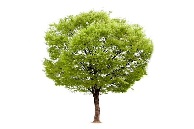 Изолированный из дерева для украшения экологии Premium Фотографии
