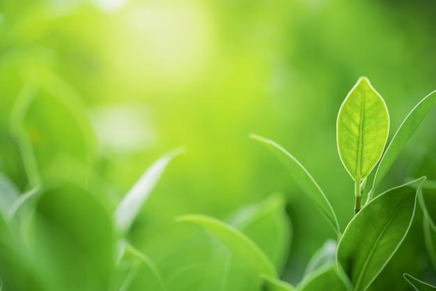 ぼやけた緑の木の背景に緑の葉 Premium写真