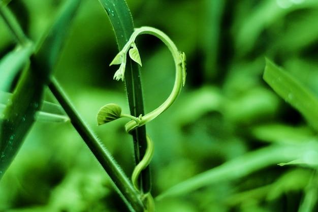 緑、植物、登る、緑、自然、背景、ぼやけ Premium写真